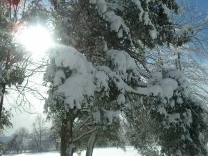 tree sun snow